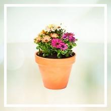 Blumenkübel & Blumentöpfe