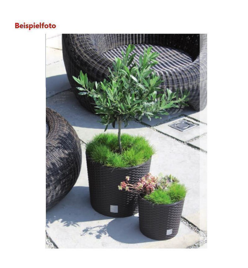 blumentopf mit einsatz rattanoptik blumenk bel pflanztopf bertopf pf 9 03. Black Bedroom Furniture Sets. Home Design Ideas