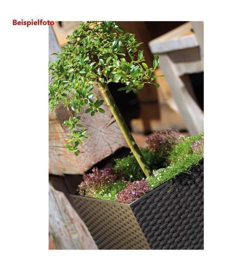 Rattan Blumenkübel blumentopf mit einsatz rattan optik pflanztopf übertopf pflanzkübel